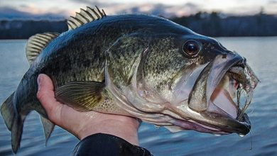 Photo of Bass Fishing Guide Tips & Gear
